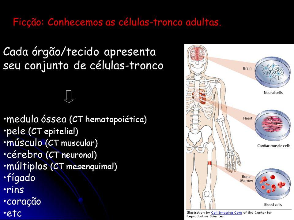 Cada órgão/tecido apresenta seu conjunto de células-tronco medula óssea (CT hematopoiética) pele (CT epitelial) músculo (CT muscular) cérebro (CT neur