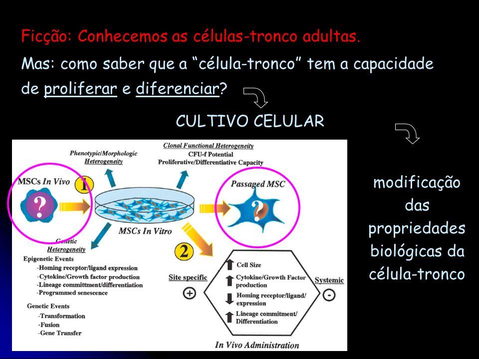 Mas: como saber que a célula-tronco tem a capacidade de proliferar e diferenciar? modificação das propriedades biológicas da célula-tronco CULTIVO CEL
