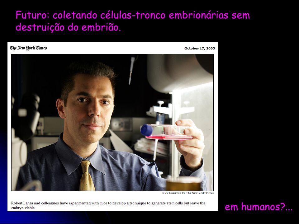 Futuro: coletando células-tronco embrionárias sem destruição do embrião. em humanos?...