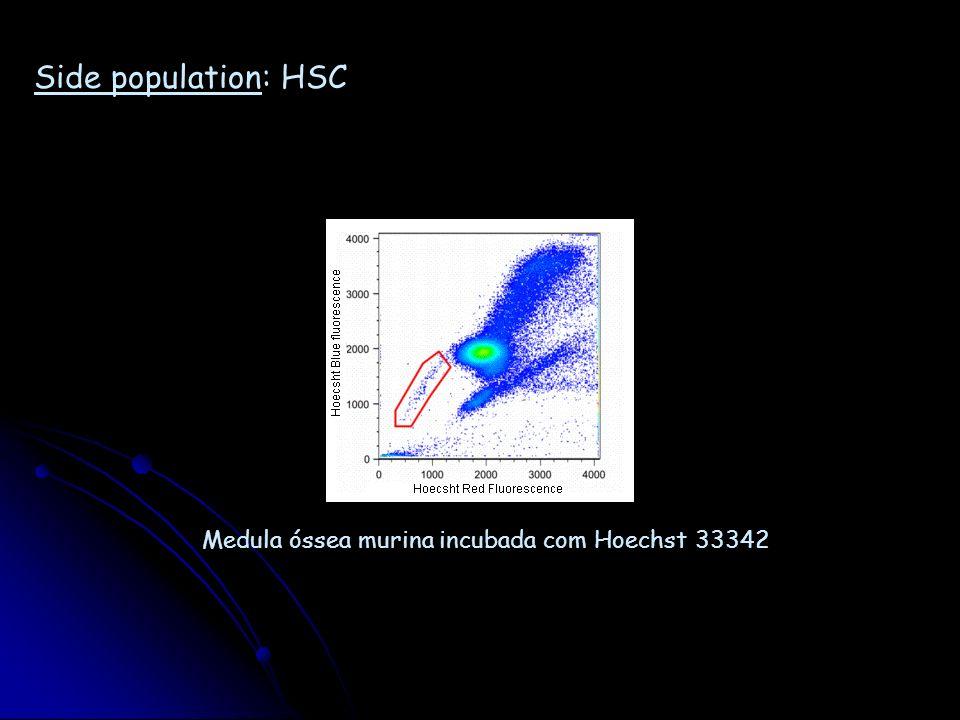 Side population: HSC Medula óssea murina incubada com Hoechst 33342