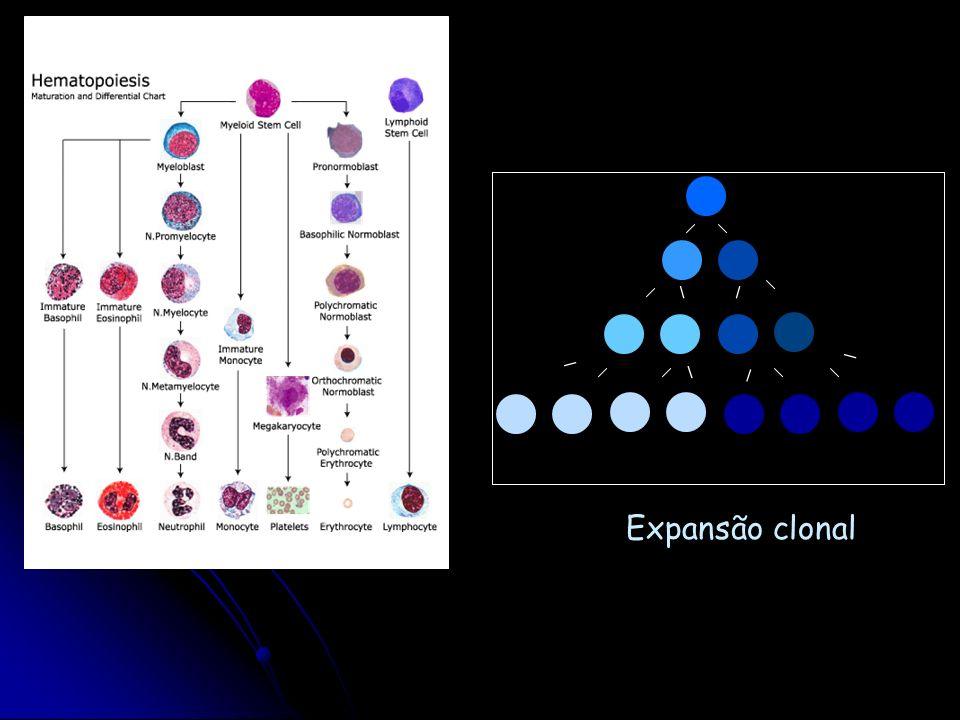 Expansão clonal