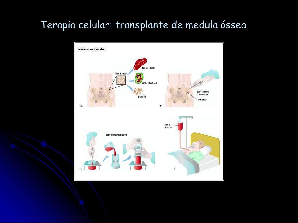 Terapia celular: transplante de medula óssea