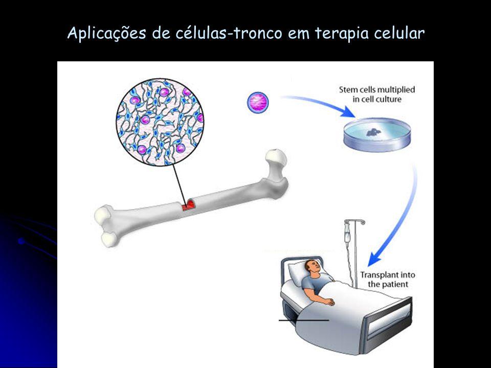Regeneração óssea...