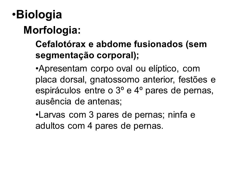 Biologia Morfologia: Cefalotórax e abdome fusionados (sem segmentação corporal); Apresentam corpo oval ou elíptico, com placa dorsal, gnatossomo anter