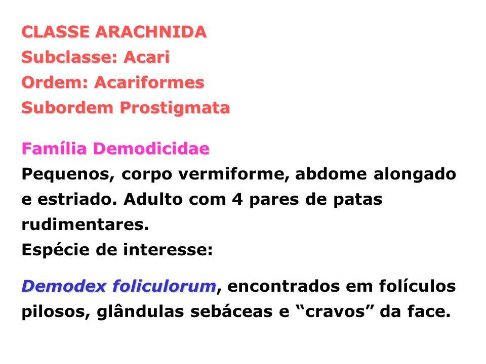 CLASSE ARACHNIDA Subclasse: Acari Ordem: Acariformes Subordem Prostigmata Família Demodicidae Pequenos, corpo vermiforme, abdome alongado e estriado.