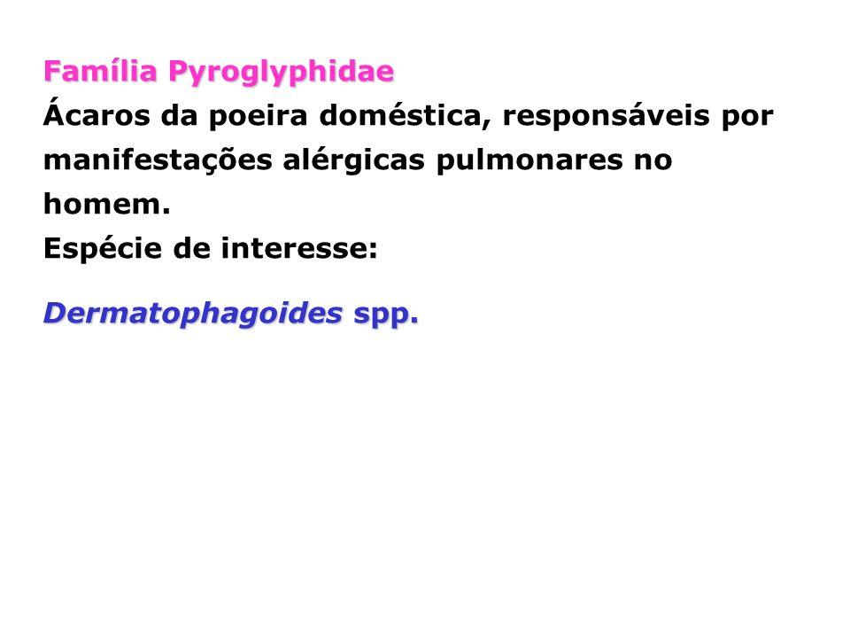 Família Pyroglyphidae Ácaros da poeira doméstica, responsáveis por manifestações alérgicas pulmonares no homem. Espécie de interesse: Dermatophagoides