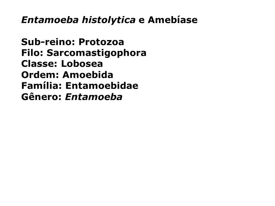 Entamoeba histolytica e Amebíase Sub-reino: Protozoa Filo: Sarcomastigophora Classe: Lobosea Ordem: Amoebida Família: Entamoebidae Gênero: Entamoeba