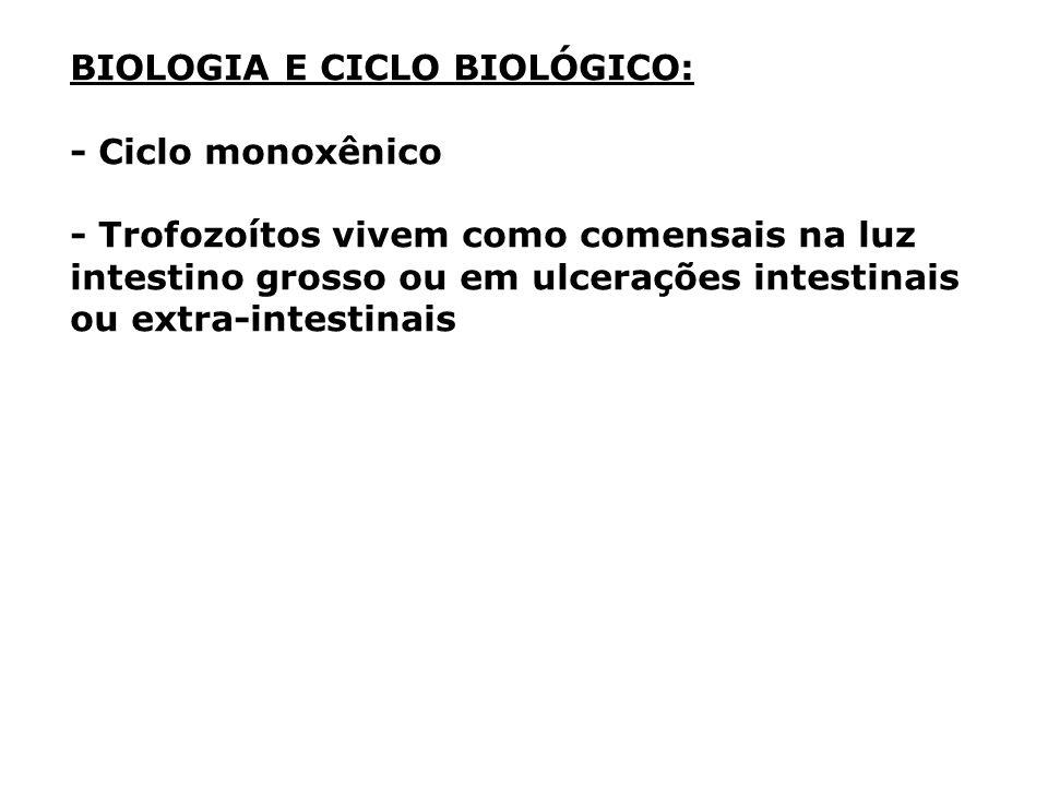 BIOLOGIA E CICLO BIOLÓGICO: - Ciclo monoxênico - Trofozoítos vivem como comensais na luz intestino grosso ou em ulcerações intestinais ou extra-intest