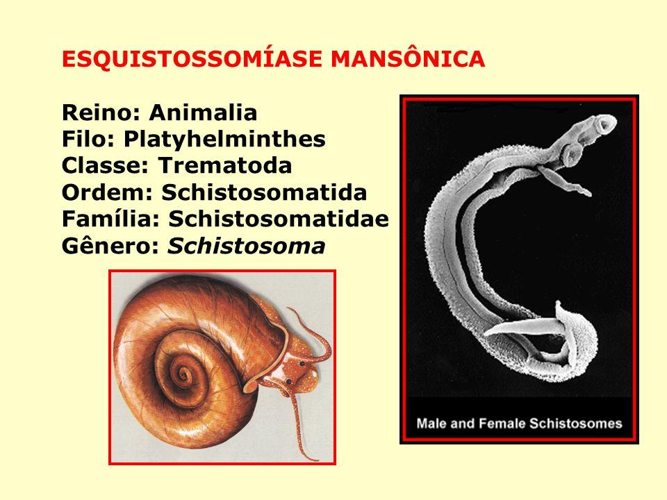 ESQUISTOSSOMÍASE MANSÔNICA Reino: Animalia Filo: Platyhelminthes Classe: Trematoda Ordem: Schistosomatida Família: Schistosomatidae Gênero: Schistosoma