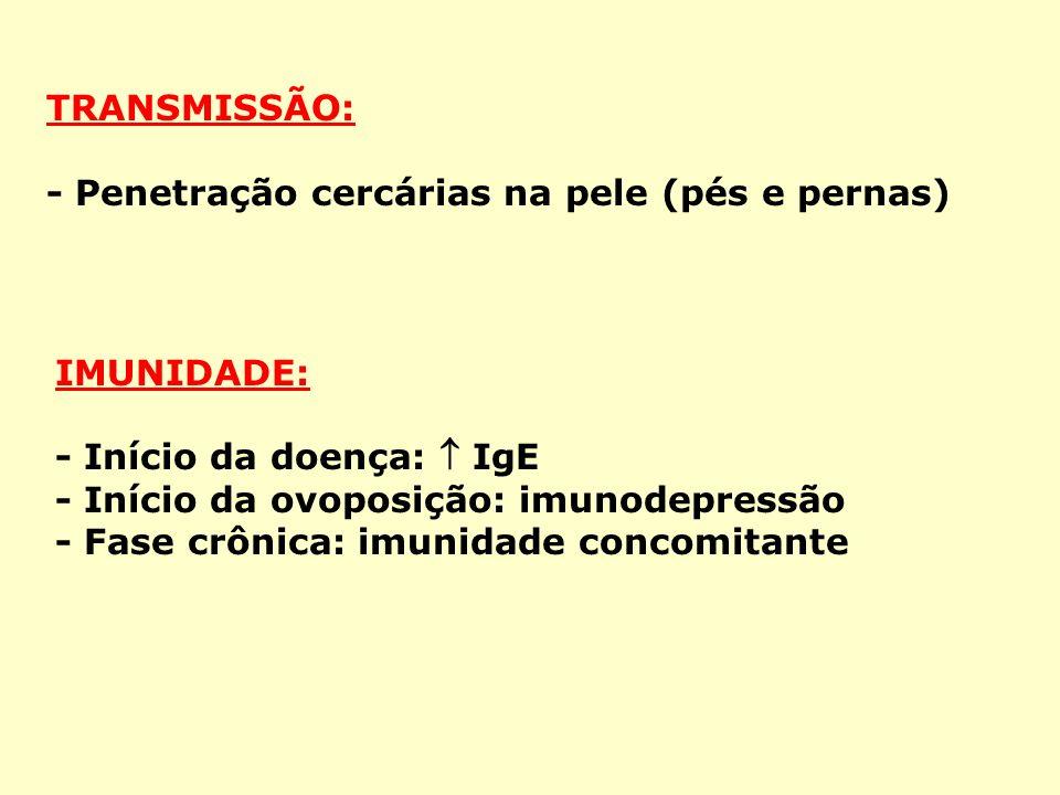 TRANSMISSÃO: - Penetração cercárias na pele (pés e pernas) IMUNIDADE: - Início da doença: IgE - Início da ovoposição: imunodepressão - Fase crônica: imunidade concomitante