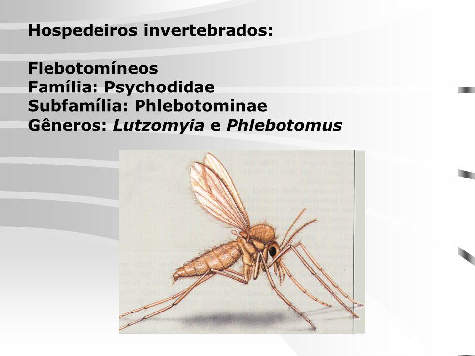 Hospedeiros invertebrados: Flebotomíneos Família: Psychodidae Subfamília: Phlebotominae Gêneros: Lutzomyia e Phlebotomus