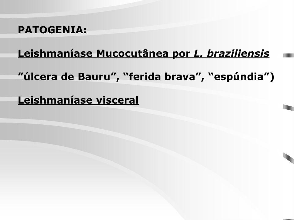 PATOGENIA: Leishmaníase Mucocutânea por L. braziliensis úlcera de Bauru, ferida brava, espúndia) Leishmaníase visceral