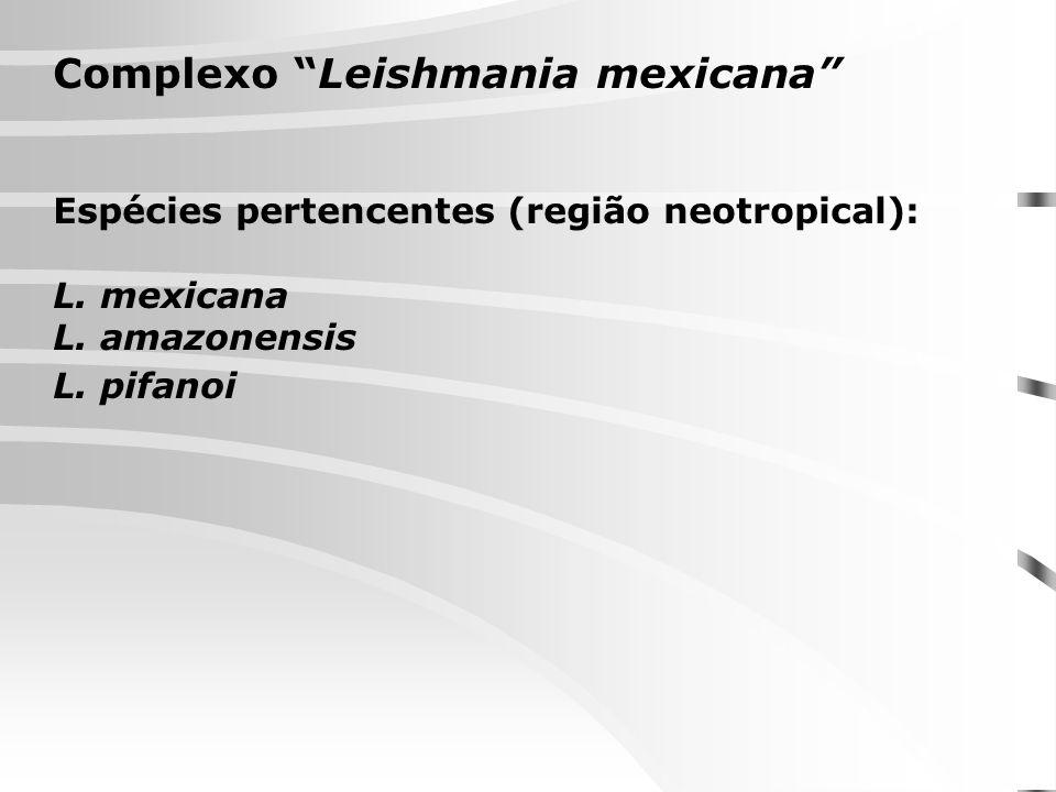 Complexo Leishmania mexicana Espécies pertencentes (região neotropical): L. mexicana L. amazonensis L. pifanoi