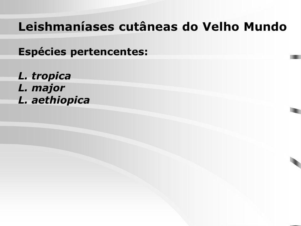 Leishmaníases cutâneas do Velho Mundo Espécies pertencentes: L. tropica L. major L. aethiopica
