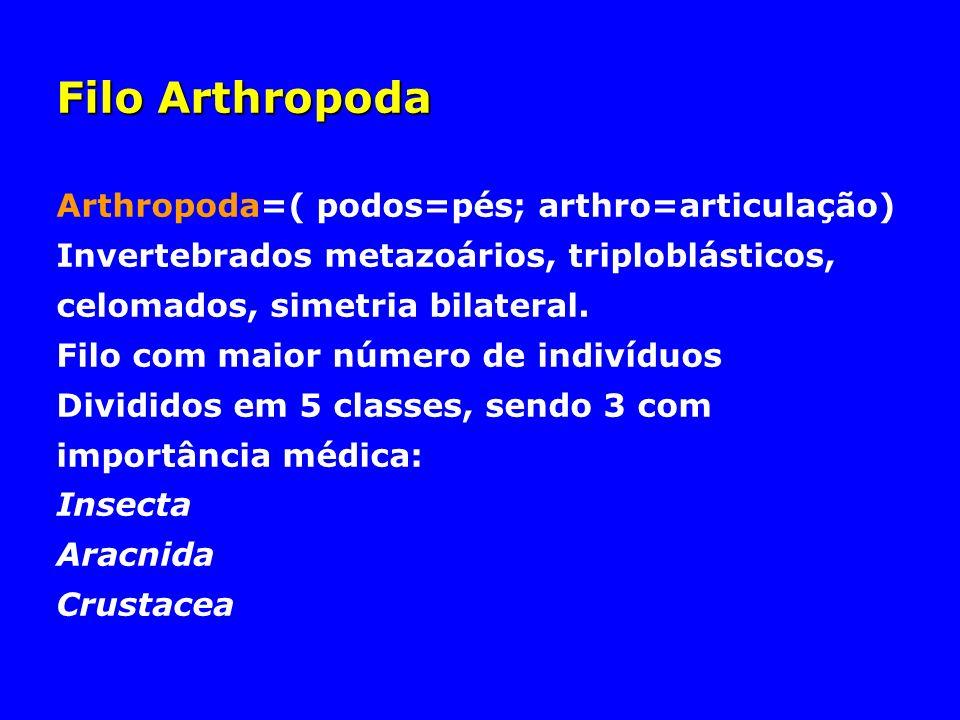 Filo Arthropoda Arthropoda=( podos=pés; arthro=articulação) Invertebrados metazoários, triploblásticos, celomados, simetria bilateral. Filo com maior