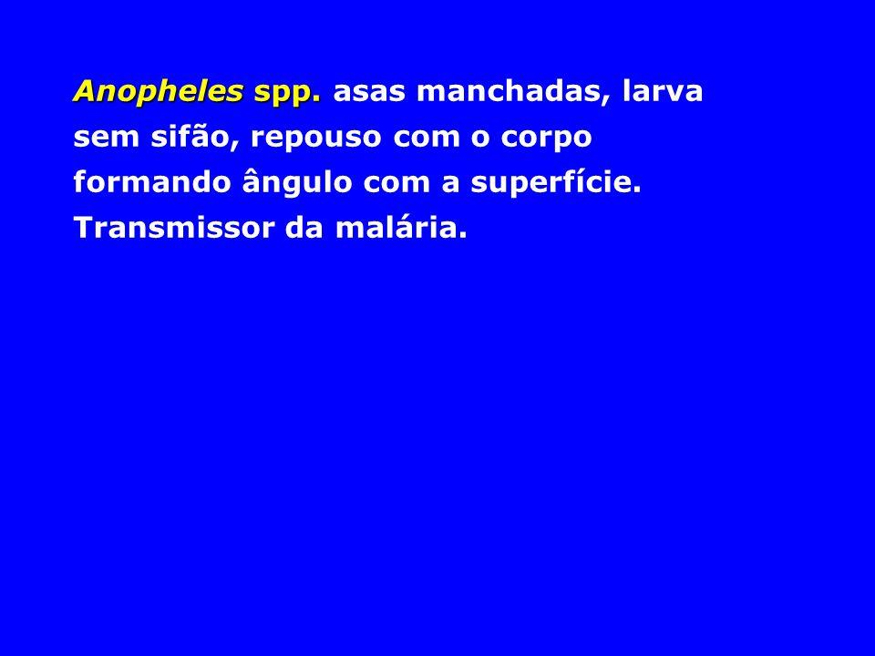 Anopheles spp. Anopheles spp. asas manchadas, larva sem sifão, repouso com o corpo formando ângulo com a superfície. Transmissor da malária.