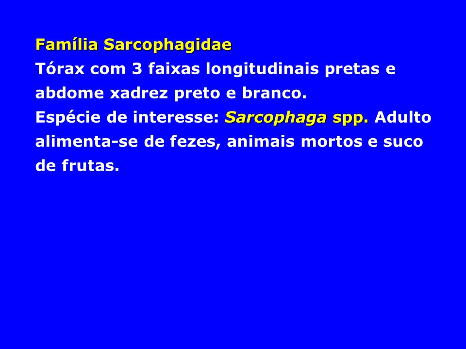 Família Sarcophagidae Tórax com 3 faixas longitudinais pretas e abdome xadrez preto e branco. Sarcophaga spp. Espécie de interesse: Sarcophaga spp. Ad