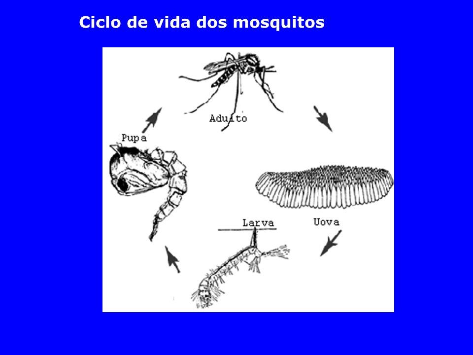 Aedes (ovos) Aedes (larva)