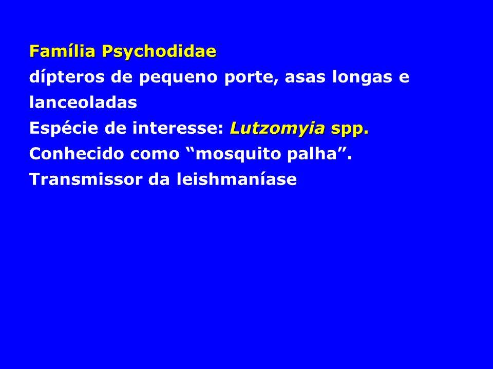 Família Psychodidae dípteros de pequeno porte, asas longas e lanceoladas Lutzomyia spp. Espécie de interesse: Lutzomyia spp. Conhecido como mosquito p