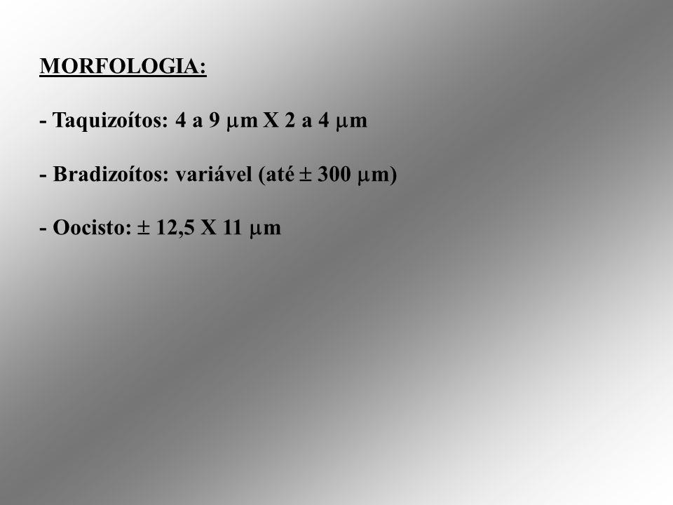 Taquizoítos de T. gondii