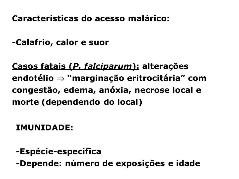 Características do acesso malárico: -Calafrio, calor e suor Casos fatais (P. falciparum): alterações endotélio marginação eritrocitária com congestão,
