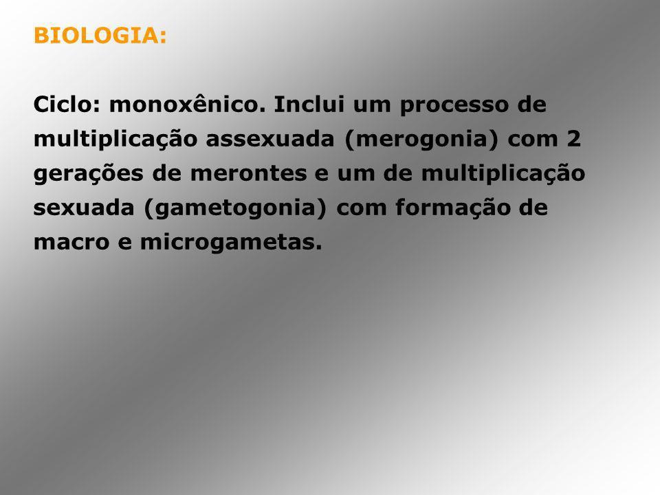 BIOLOGIA: Ciclo: monoxênico. Inclui um processo de multiplicação assexuada (merogonia) com 2 gerações de merontes e um de multiplicação sexuada (gamet