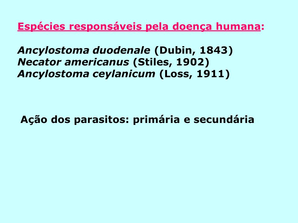 MORFOLOGIA: Ancylostoma duodenale Descrição: (aspecto, cor, cápsula bucal) Fêmea: 10-18 mm.