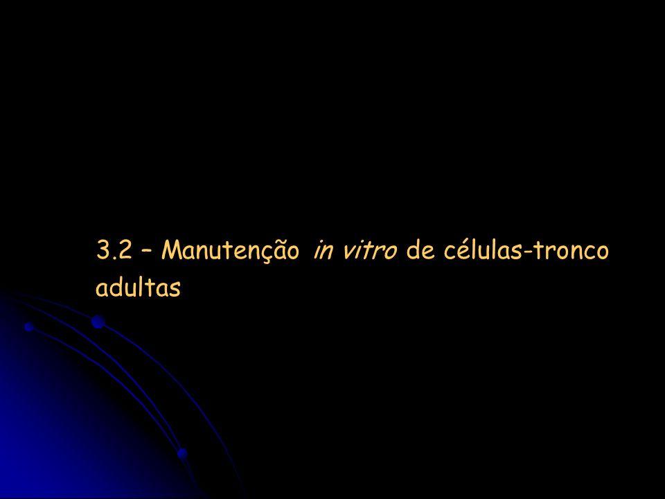 3.2 – Manutenção in vitro de células-tronco adultas