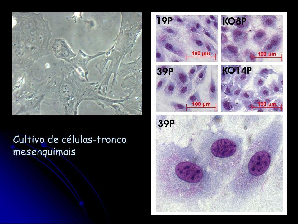 Cultivo de células-tronco mesenquimais