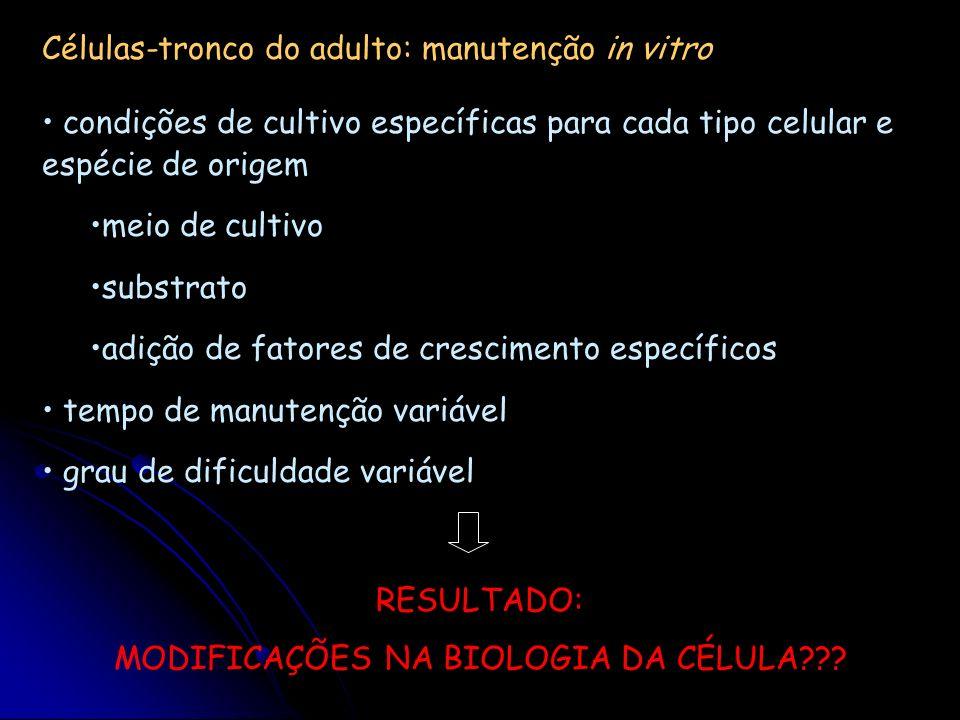 Células-tronco do adulto: manutenção in vitro condições de cultivo específicas para cada tipo celular e espécie de origem meio de cultivo substrato ad