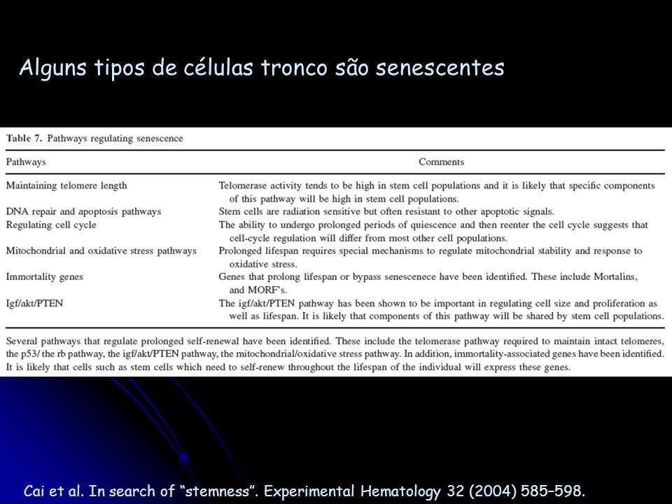 Cai et al. In search of stemness. Experimental Hematology 32 (2004) 585–598. Alguns tipos de células tronco são senescentes