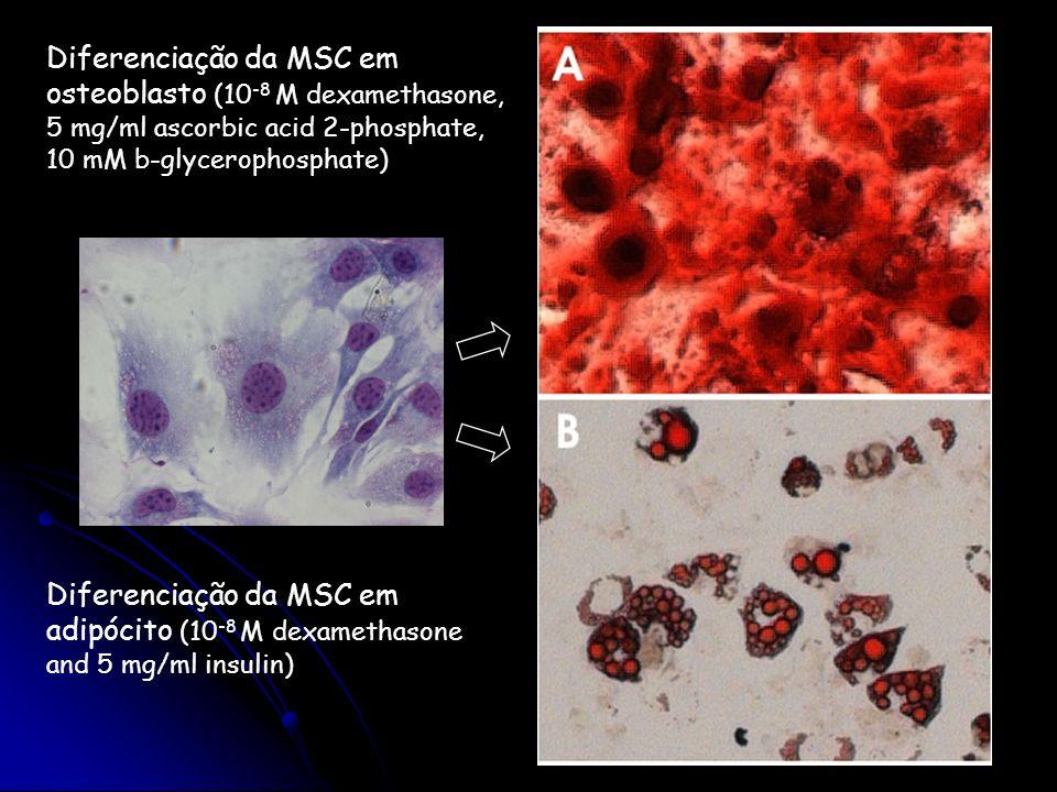 Diferenciação da MSC em osteoblasto (10 -8 M dexamethasone, 5 mg/ml ascorbic acid 2-phosphate, 10 mM b-glycerophosphate) Diferenciação da MSC em adipó