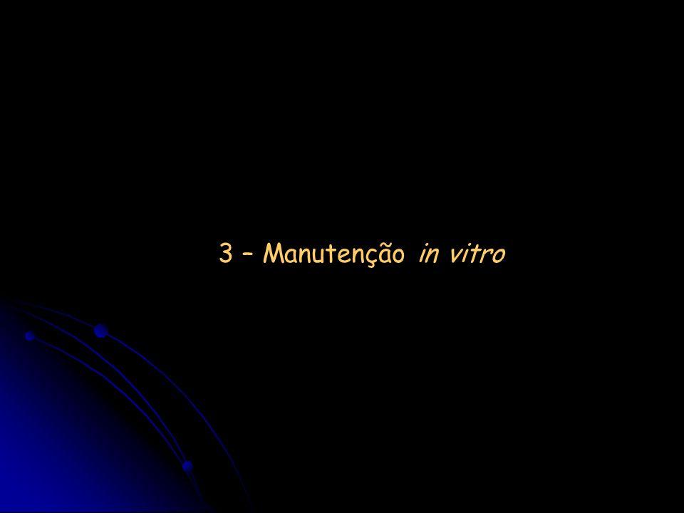 3 – Manutenção in vitro