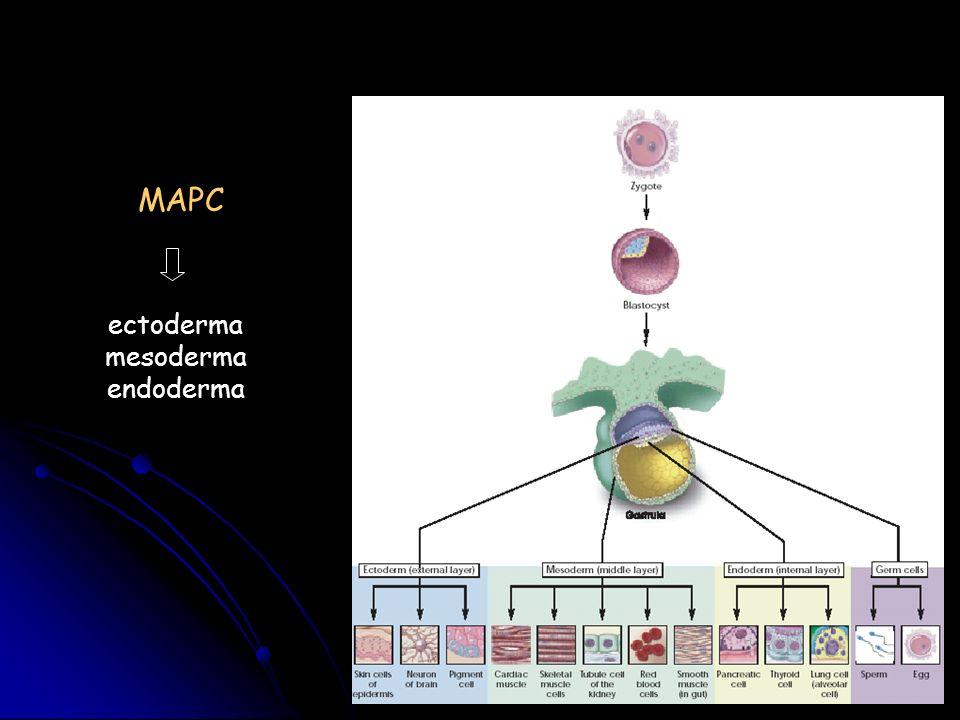 MAPC ectoderma mesoderma endoderma