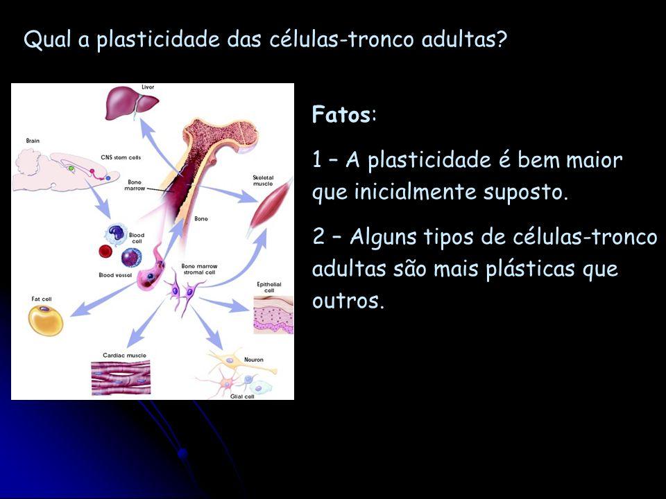 Qual a plasticidade das células-tronco adultas? Fatos: 1 – A plasticidade é bem maior que inicialmente suposto. 2 – Alguns tipos de células-tronco adu