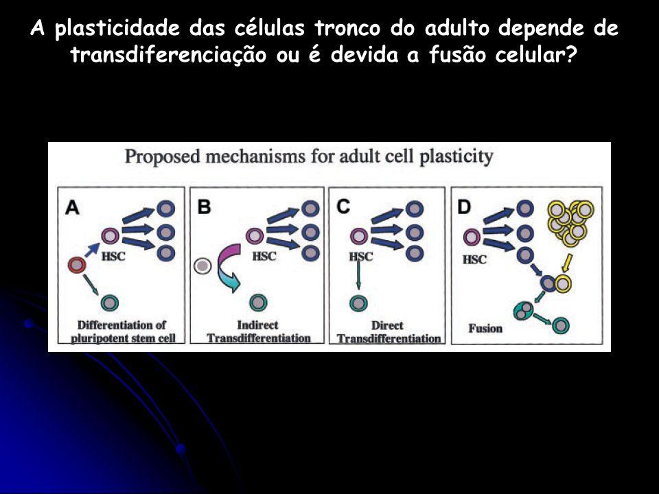 A plasticidade das células tronco do adulto depende de transdiferenciação ou é devida a fusão celular?