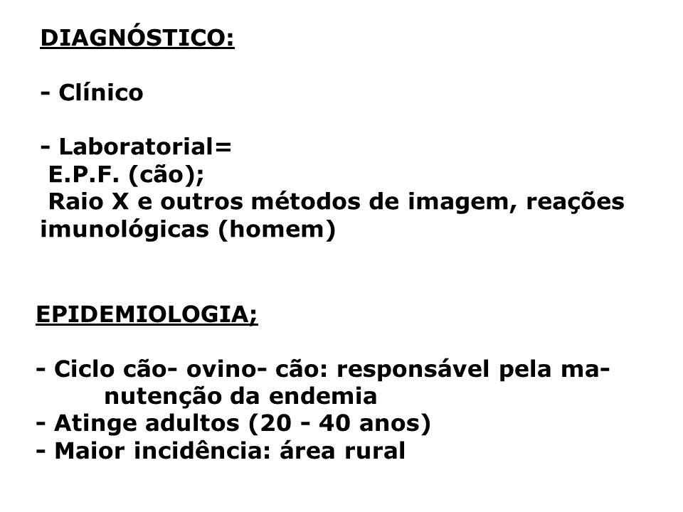DIAGNÓSTICO: - Clínico - Laboratorial= E.P.F. (cão); Raio X e outros métodos de imagem, reações imunológicas (homem) EPIDEMIOLOGIA; - Ciclo cão- ovino