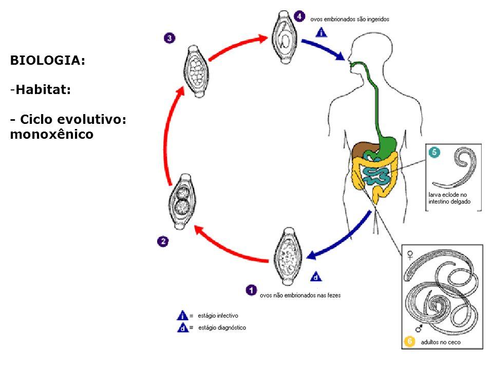 BIOLOGIA: -Habitat: - Ciclo evolutivo: monoxênico