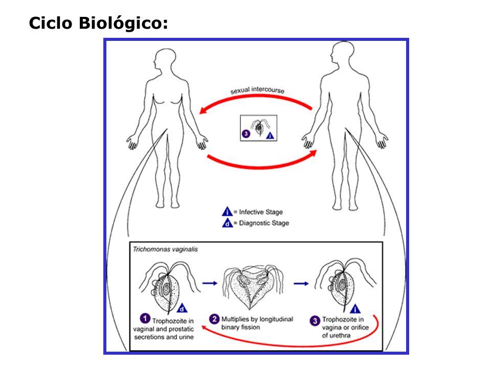 TRANSMISSÃO: -Relação sexual -Via não sexual (também aceita) PATOLOGIA: Sinais e sintomas: Mulher: assintomática a aguda Homem: comumente assintomático