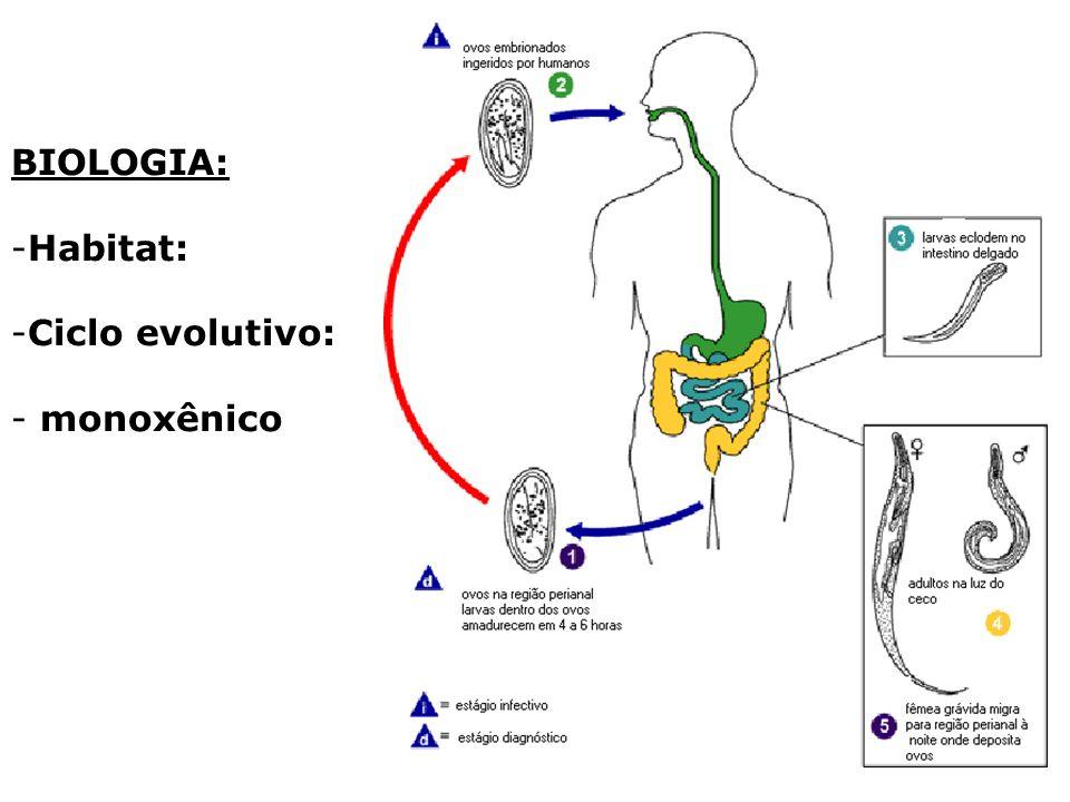 TRANSMISSÃO: - Heteroinfecção - Transm.
