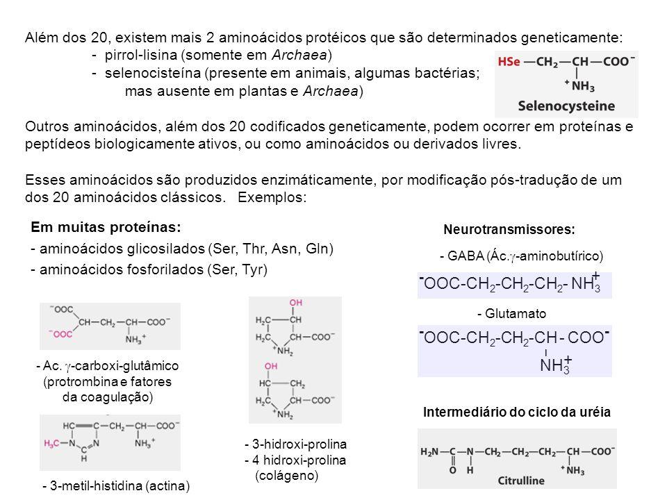 Além dos 20, existem mais 2 aminoácidos protéicos que são determinados geneticamente: - pirrol-lisina (somente em Archaea) - selenocisteína (presente