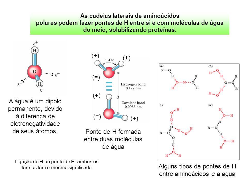 Alguns tipos de pontes de H entre aminoácidos e a água Ponte de H formada entre duas moléculas de água (+) (=) (+) (=) (+) A água é um dipolo permanen