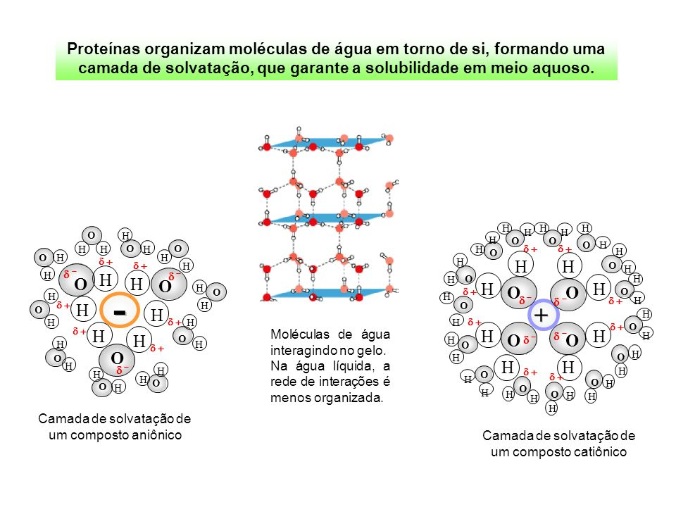 Proteínas organizam moléculas de água em torno de si, formando uma camada de solvatação, que garante a solubilidade em meio aquoso. Moléculas de água