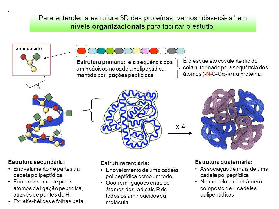 Para entender a estrutura 3D das proteínas, vamos dissecá-la em níveis organizacionais para facilitar o estudo:. Estrutura primária: é a sequência dos