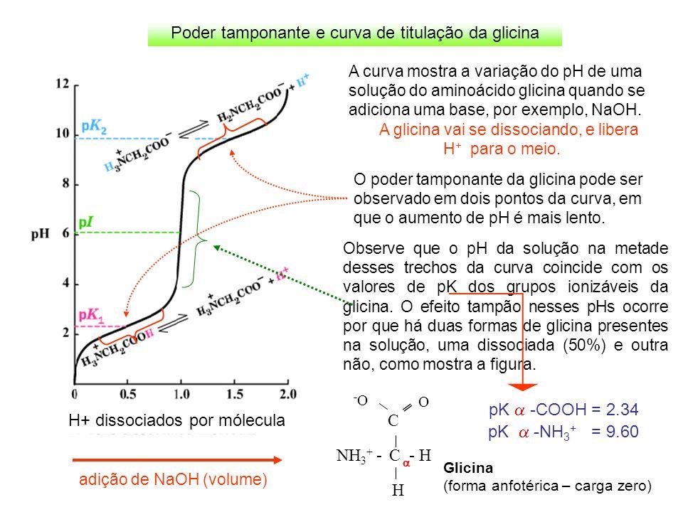 Poder tamponante e curva de titulação da glicina pK -NH 3 + = 9.60 pK -COOH = 2.34 C NH 3 + - C - H H O -O-O H+ dissociados por mólecula A curva mostr