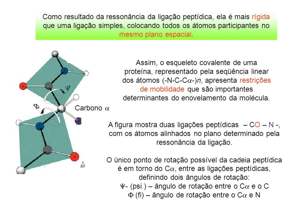 Carbono Assim, o esqueleto covalente de uma proteína, representado pela seqüência linear dos átomos (-N-C-C -)n, apresenta restrições de mobilidade qu