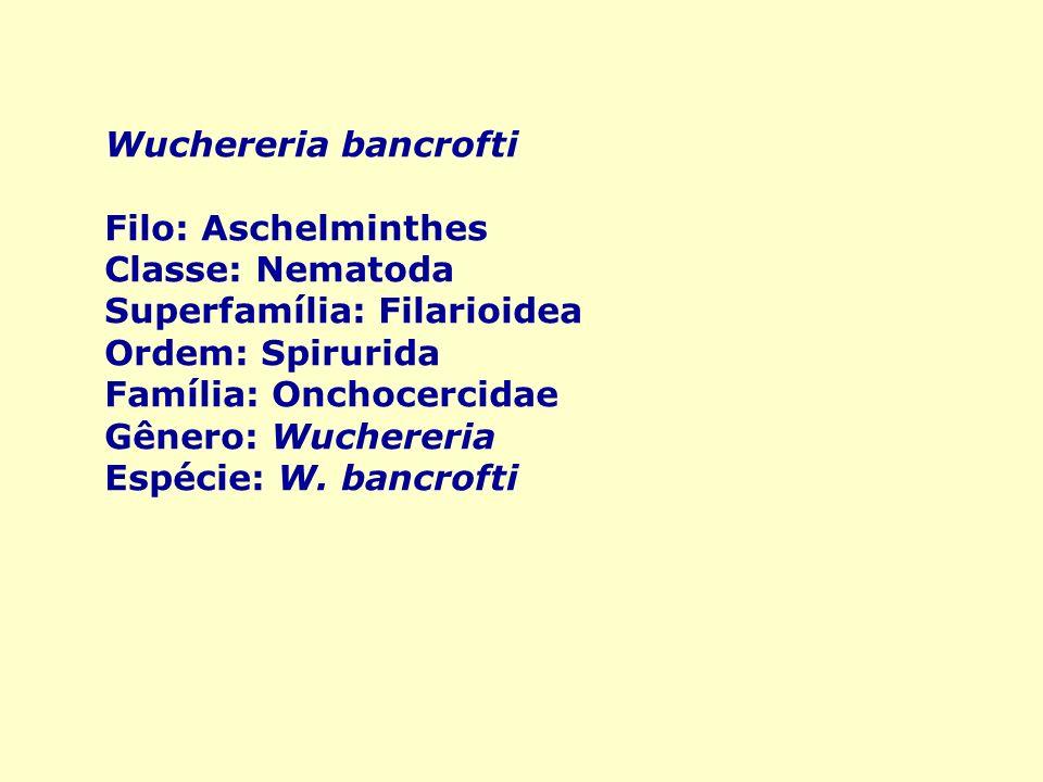 Wuchereria bancrofti Filo: Aschelminthes Classe: Nematoda Superfamília: Filarioidea Ordem: Spirurida Família: Onchocercidae Gênero: Wuchereria Espécie