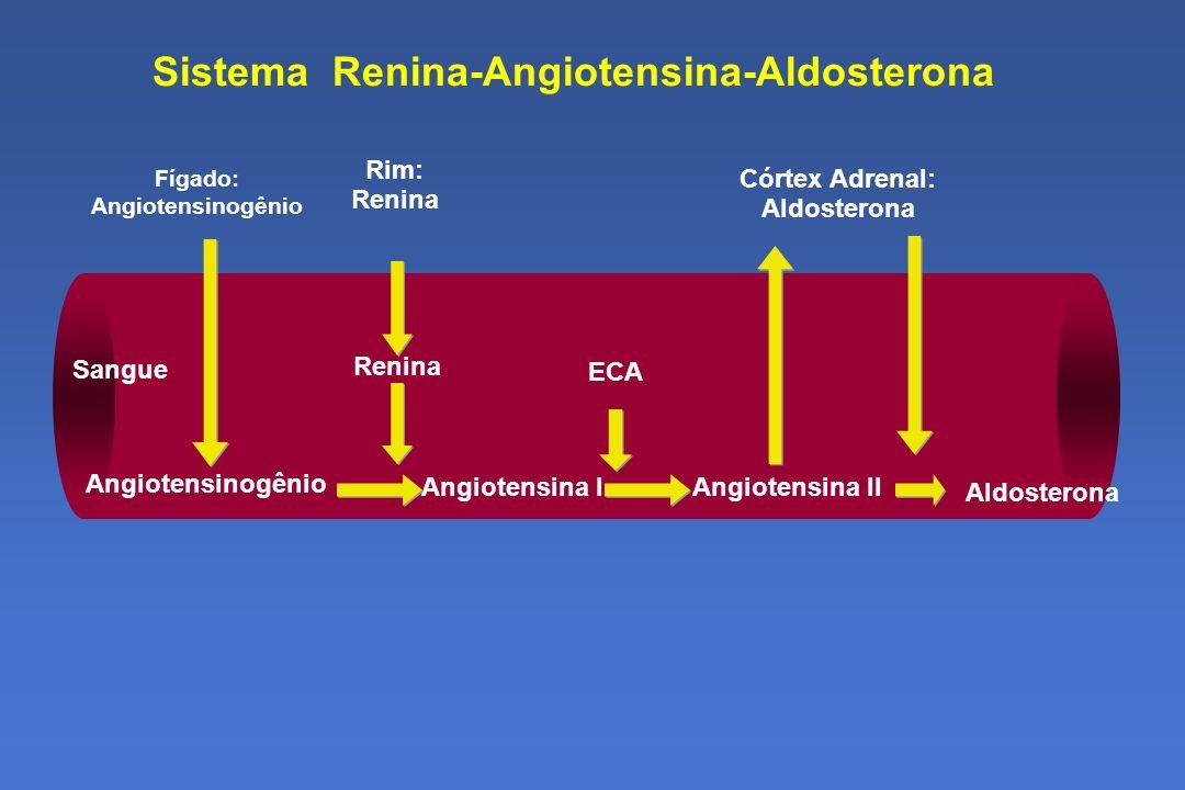 Sistema Renina-Angiotensina-Aldosterona Sangue ECA Angiotensina II Angiotensinogênio Fígado: Angiotensinogênio Rim: Renina Angiotensina I Renina Córtex Adrenal: Aldosterona