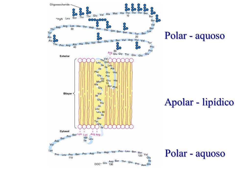 Apolar - lipídico Polar - aquoso