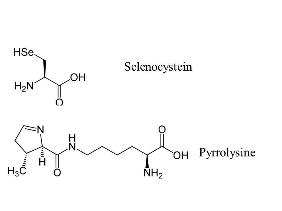 Selenocystein Pyrrolysine